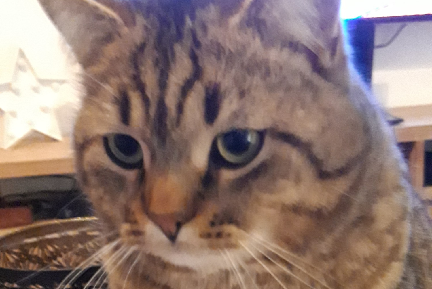 Disappearance alert Cat Male , 3 years Wavre Belgium