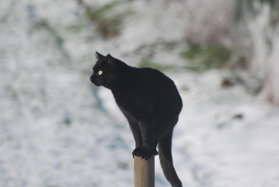 Disappearance alert Cat Male , 4 years Perwez Belgium