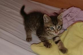 Discovery alert Cat Male , Between 1 and 3 months Brugge Belgium