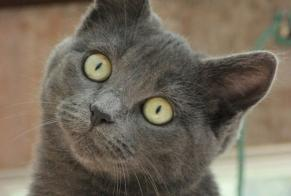 Disappearance alert Cat  Female , 9 years Flémalle Belgium