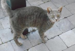 Discovery alert Cat Male , Between 9 and 12 months Namur Belgium