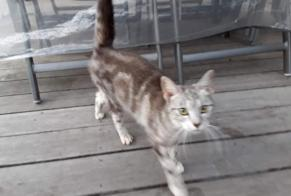 Discovery alert Cat miscegenation Unknown Sprimont Belgium