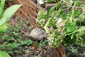 Discovery alert Tortoise Unknown Uccle Belgium