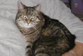 Disappearance alert Cat  Female , 9 years Uccle Belgium