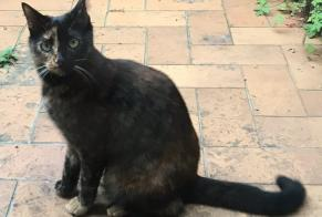 Disappearance alert Cat  Female , 3 years Chaudfontaine Belgium