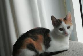 Disappearance alert Cat miscegenation Female , 0 years Namur Belgium
