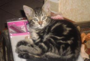 Disappearance alert Cat Female , 6 years Ath Belgium
