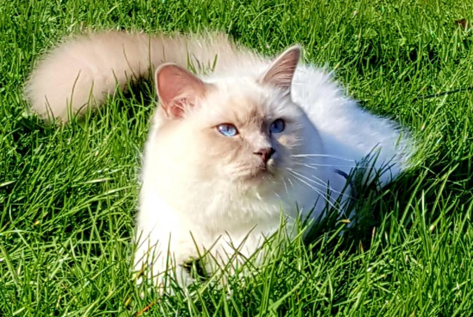 Disappearance alert Cat  Male , 1 years Profondeville Belgium