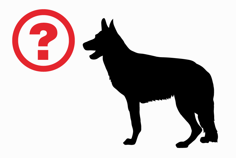 Discovery alert Dog miscegenation Male Chaudfontaine Belgium