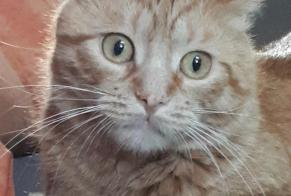 Alerte Disparition Chat Mâle , 2 ans Frameries Belgique
